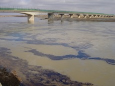 Oil floods the Tigris River in January 2005. This became more common as the year went on.